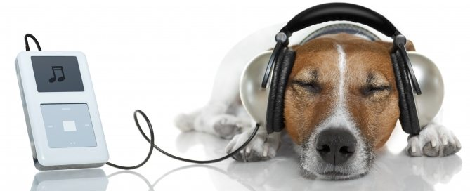 dog-listening-to-music1