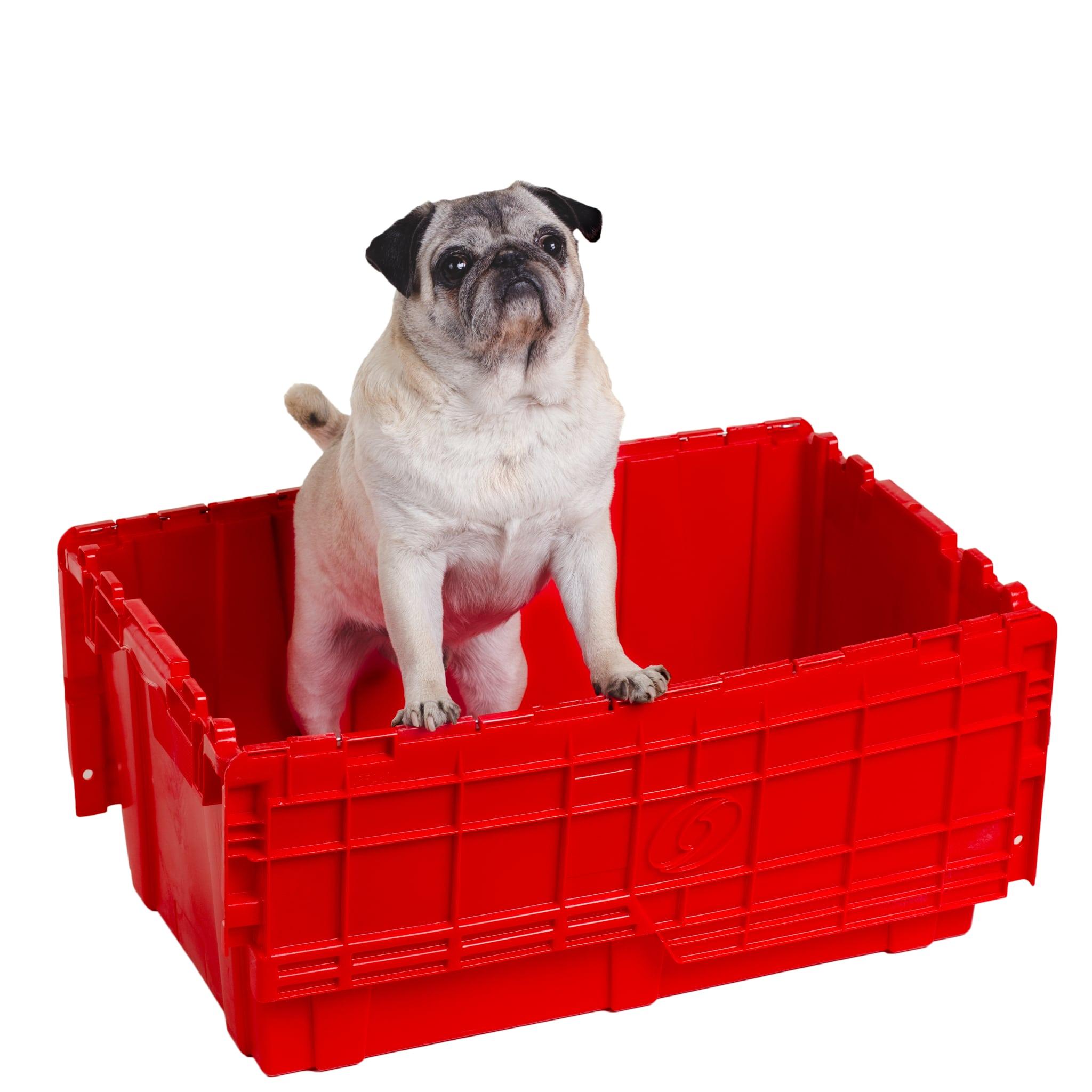 Oscar The Pug