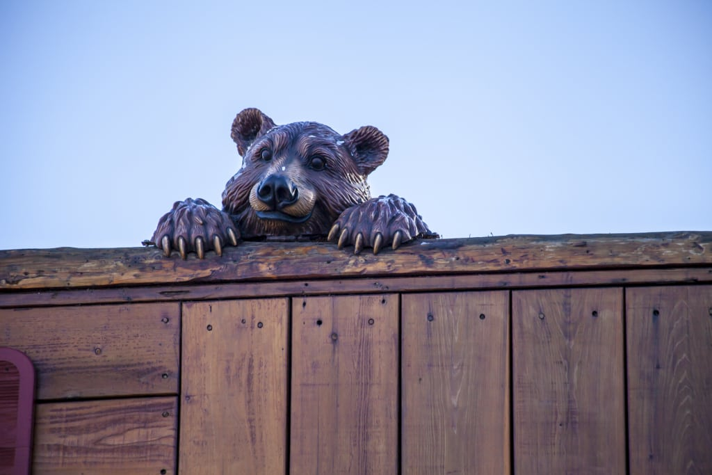 bear, unwanted guest at the cottage