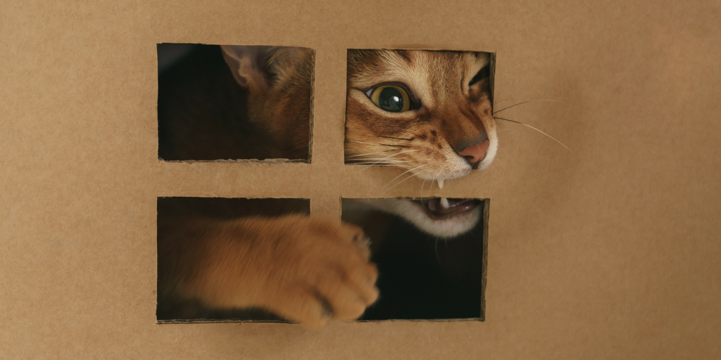 Cargo Cabbie Reuse Boxes #2 Build Cat House