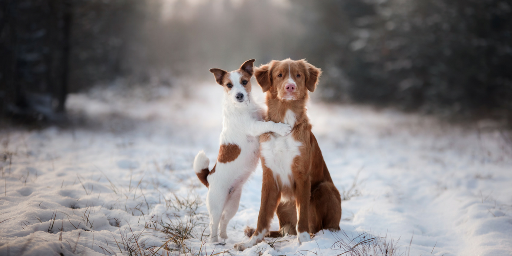 Plan Ahead for Children and Pets