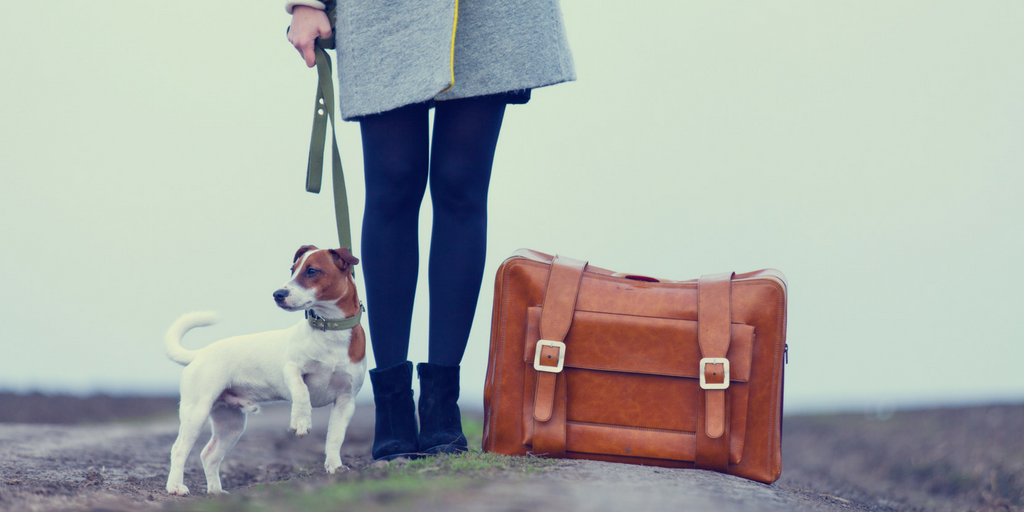 8 Simple Rules to Moving with Dogs - GUEST: Urbaneer @CargoCabbie