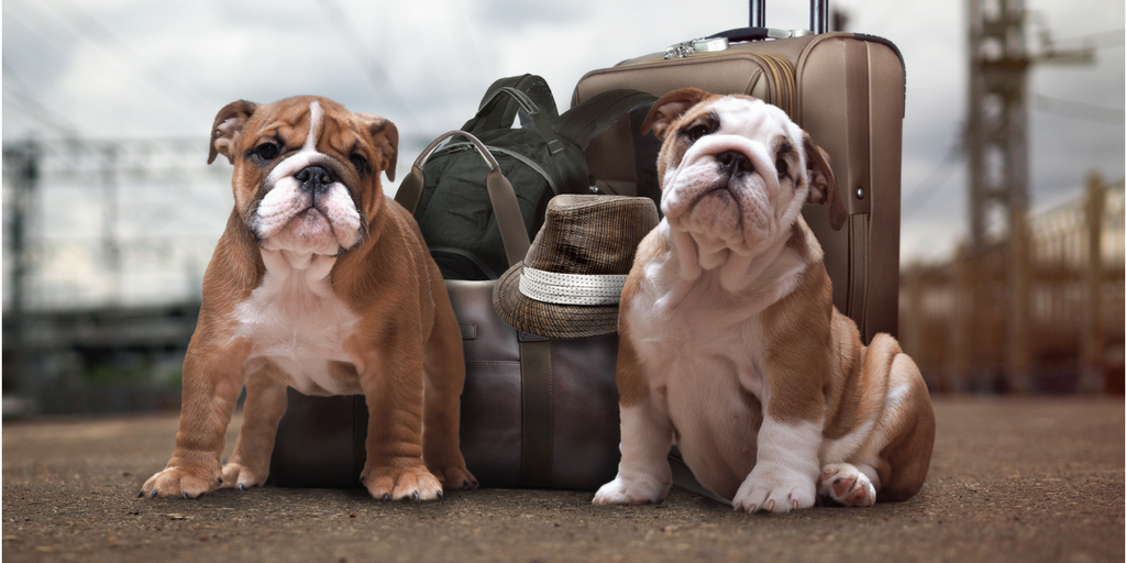 Guest Post - Moving w Dogs tips and advice