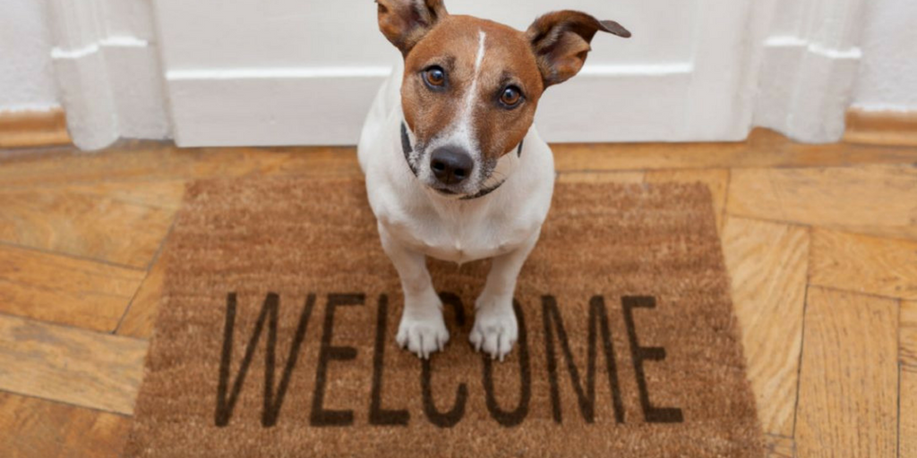 Guest Post - Moving w Dogs, welcome home
